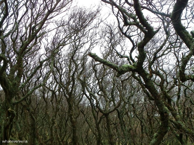 Staffin Bay Trees Wina
